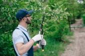 zahradník v přestřihávání, čepice a rukavice na čištění stromů v parku