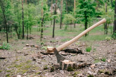 sharp, heavy ax with wooden handle on wood stump in forest