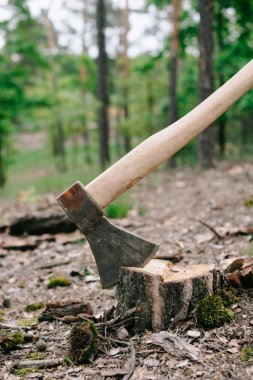 heavy, sharp axe with wooden handle on wood stump in forest