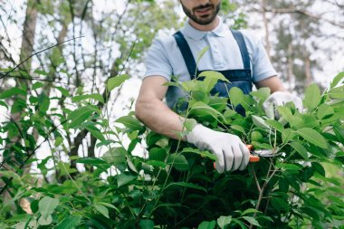 cropped view of gardener in gloves pruning bushes with trimmer in garden