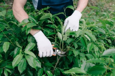 partial view of gardener in gloves pruning bush with trimmer in garden