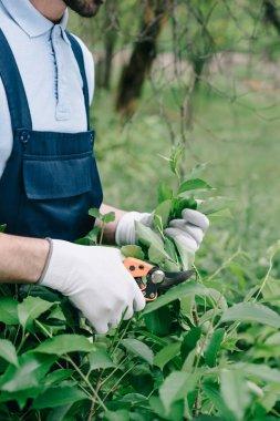 Partial view of gardener in overalls and gloves trimming bush with pruner in garden stock vector