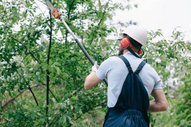 back view of gardener in helmet and hearing protectors trimming trees with telescopic pole saw