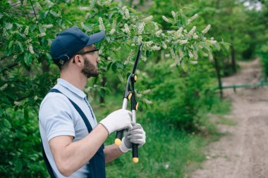 gardener in overalls, cap and gloves pruning trees with trimmer in park