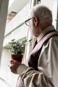 pensionato uomo barbuto in occhiali tenendo pianta
