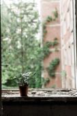 piccola pianta con foglie verdi in vaso su davanzale sporco