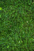 Top view of green grass with leaves on meadow