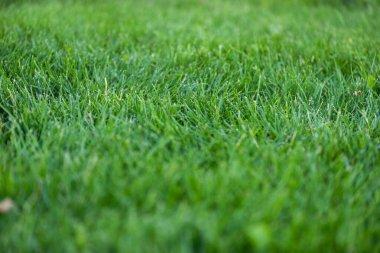 Selective focus of green grass on meadow stock vector
