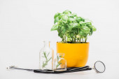 green plant in flowerpot near herbs in glass bottles and stethoscope on white background, naturopathy concept