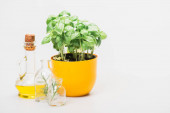 green plant in flowerpot near herbs in glass bottles and essential oil on white background, naturopathy concept