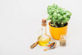 green plant in flowerpot near pills and herbs in glass bottles and essential oil on white background, naturopathy concept