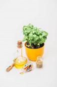 zelená rostlina v květináči v blízkosti pilulky a byliny ve skleněných lahvích a esenciální olej na bílém pozadí, naturopatie koncept