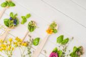 shora pohled na byliny a zelené listy v lžičkách v blízkosti květin na bílém dřevěném pozadí, naturopathy koncept
