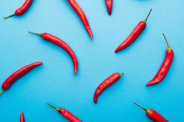 Top view of spicy red chili peppers on blue background stock vector