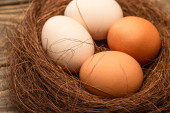 close up view of fresh chicken eggs in nest