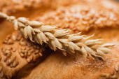 close up view of fresh baked white bread loaf with spikelet