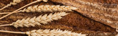 close up view of fresh baked bread with spikelets, panoramic shot