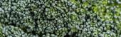 zblízka pohled na čerstvou zelenou brokolici, panoramatický záběr