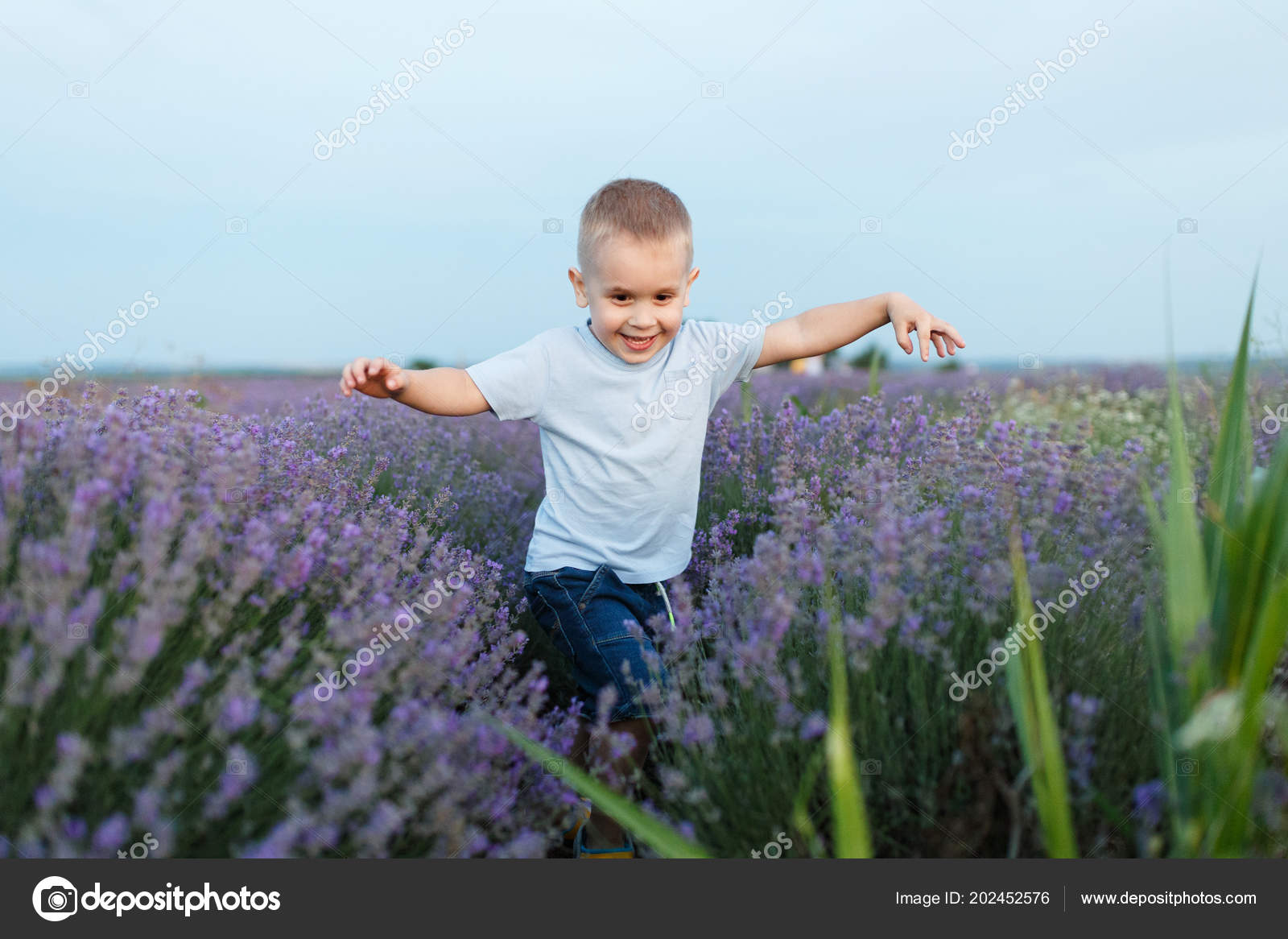 b623cf2d0 Playful little cute child baby boy walk on purple lavender flower meadow  field background, run, have fun, play, enjoy. Joyful small kid son.