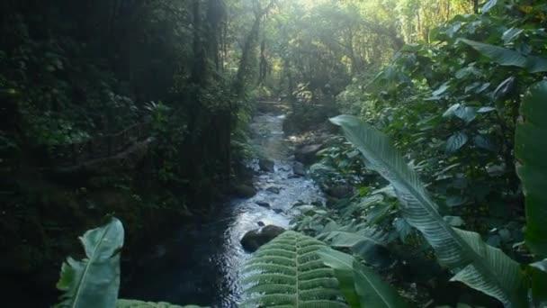 Rainforest at Costa Rica