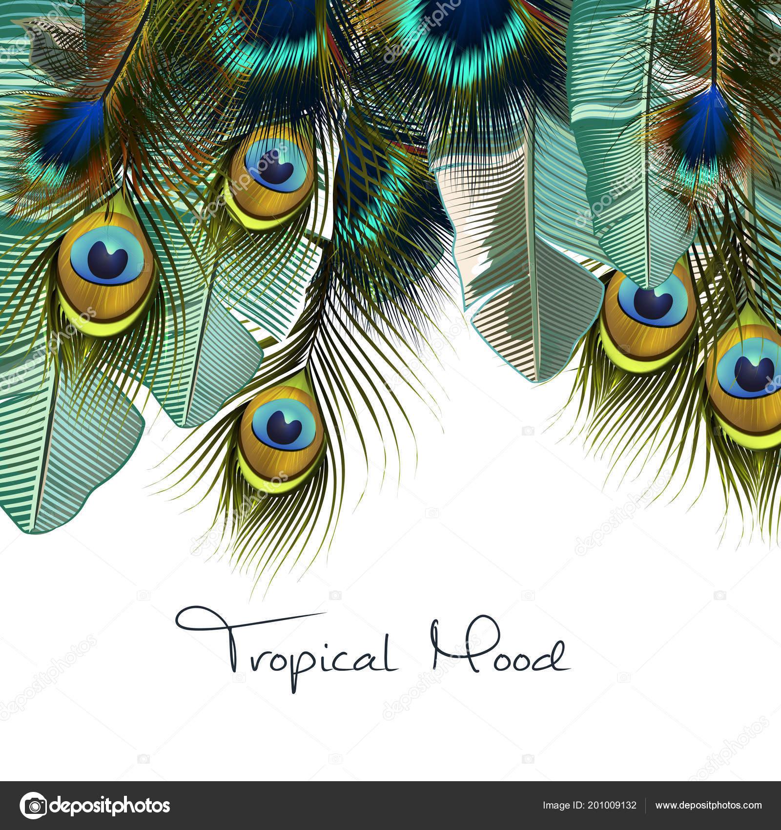 Hojas Tropical Ilustración Moda Con Plumas Pavo Real Realista ...