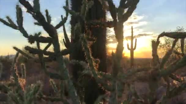 Scottsdale, Arizona sivatagi naplemente