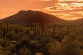 Dél-Nyugat-Usa, Arizona sivatagi táj, babona-hegy közelében Phoenix.