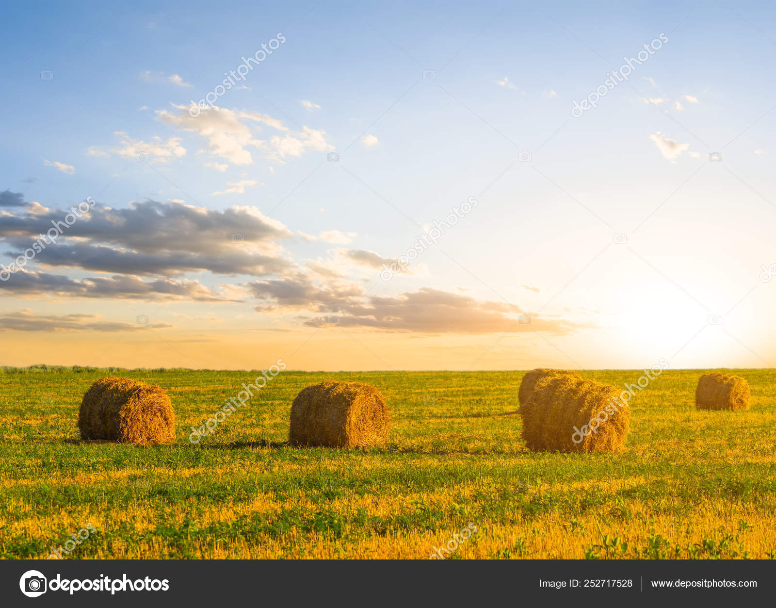 Summer Wheat Field Harvest Sunset Stock Photo C York 76