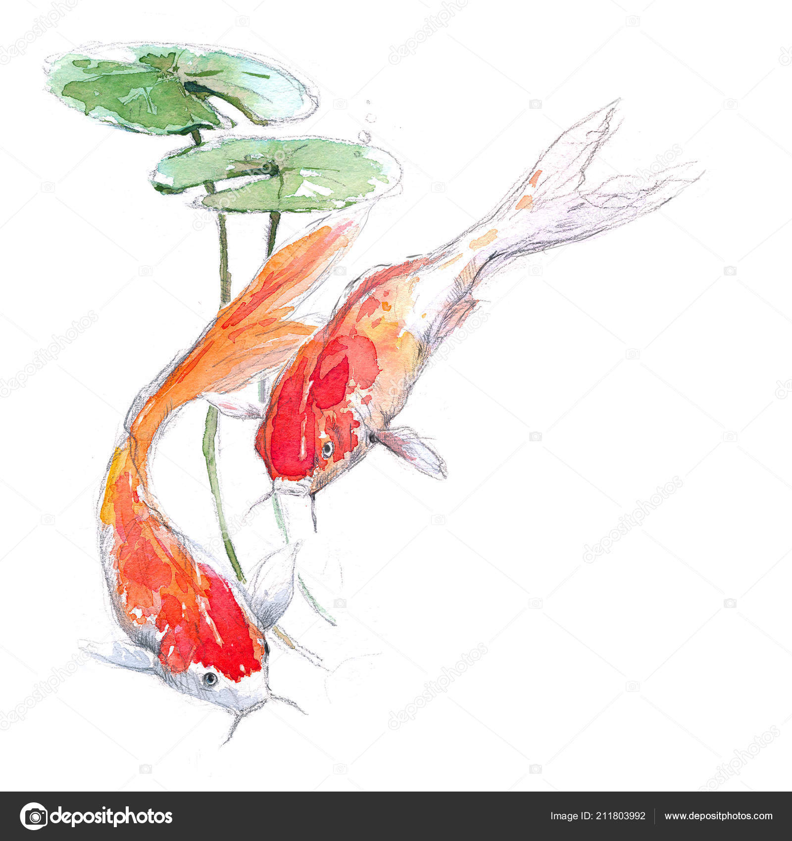 Watercolor Sketch Illustration Gold Koi Hand Drawn Aquarium Fish