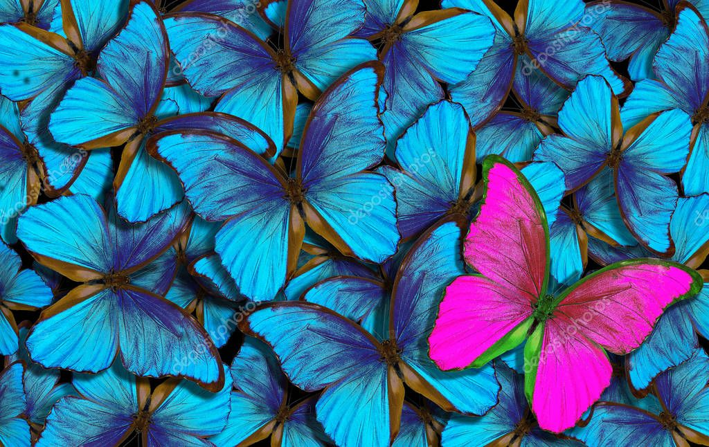 beautiful colorful background with lot of different butterflys. wings of a butterfly morpho.