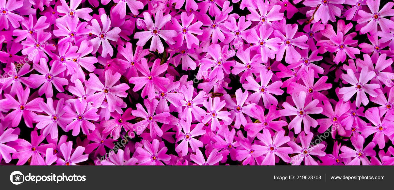 Pink Flowers Garden Top View Natural Pink Background \u2014 Stock