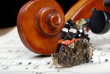 violin and butterfly. neck of a violin and notes close up. butterfly admiral.