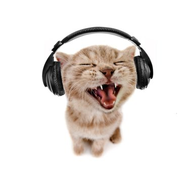 Kitten listens to music in earphones, on white  background , isolated, closeup  muzzle stock vector
