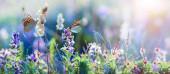 divoce rostoucí květiny a trávy closeup, horizontální panorama Foto