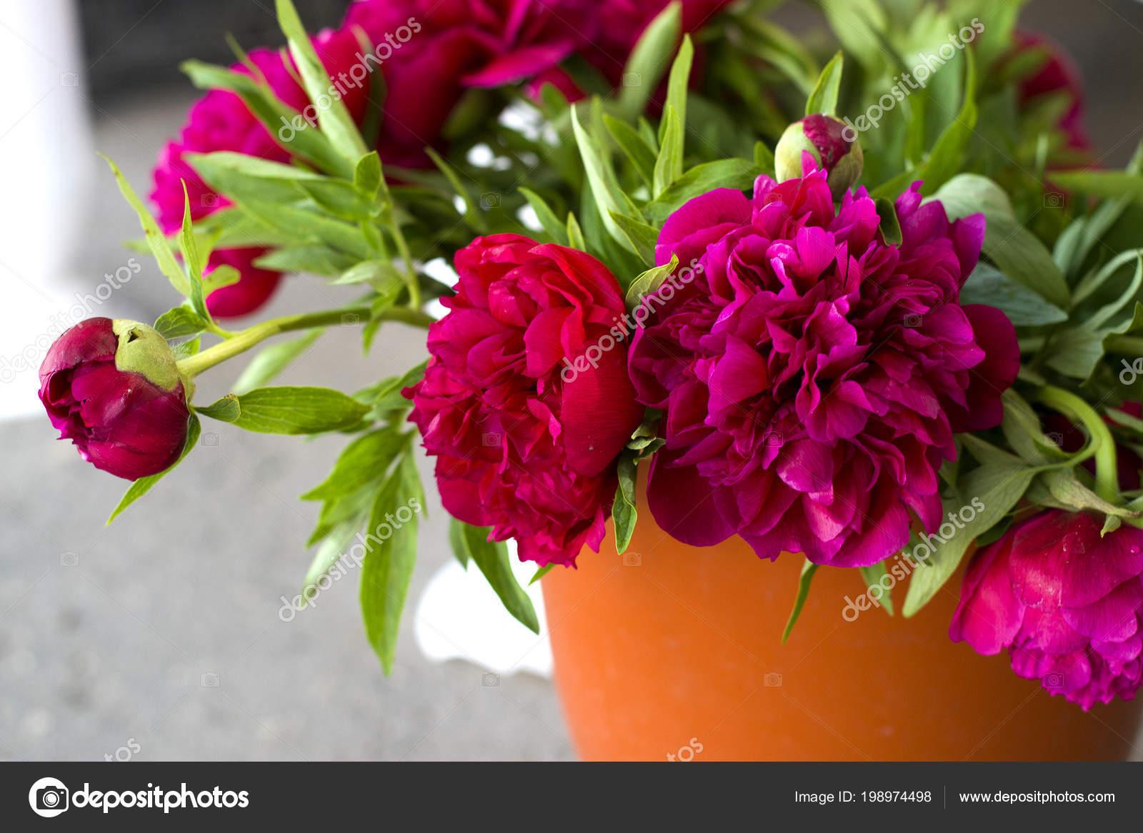 Trois Fleurs Pivoines Rose Fonce Dans Vase Interieur Fleurs