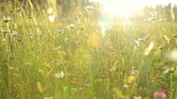 Letní pole při západu slunce