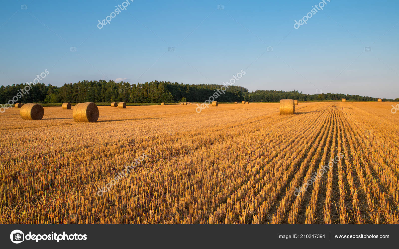Sunlit Stubble Straw Bales Rural Landscape Golden Summer