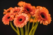 Fotografie bouquet with beautiful orange gerbera flowers, isolated on black