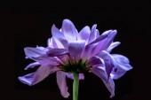 Fotografie květinové