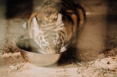Fotografie close up view of cute tiger cub eating meal at zoo