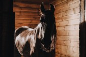 Fotografie selective focus of beautiful horse in standing stall at zoo