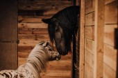 Fotografie selective focus of beautiful horse and pony in standing stall at zoo