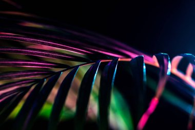 palm leaf with trendy color filter, isolated on black