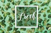 vista superiore del telaio bianco quadrato con parola fresca e belle foglie verdi fresche su verde