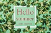 cornice con lestate di parole Ciao bianca, godere vacanze e foglie verdi fresche su verde