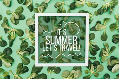 top view of words its summer, lets travel in frame and beautiful fresh green leaves on green