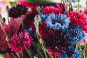 a gyönyörű színes Búzavirág, szelektív összpontosít kiadványról