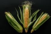 plochý ležela s uspořádány syrové čerstvé kukuřičné klasy izolované na černém pozadí