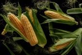 Fotografie pohled shora uspořádání čerstvé kukuřičné klasy izolované na černém pozadí