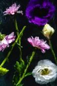 Detailní pohled mokré růžové, modré a bílé květy s zelené stonky na černém pozadí